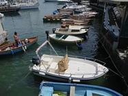 Foto Napoli folkloristica 090