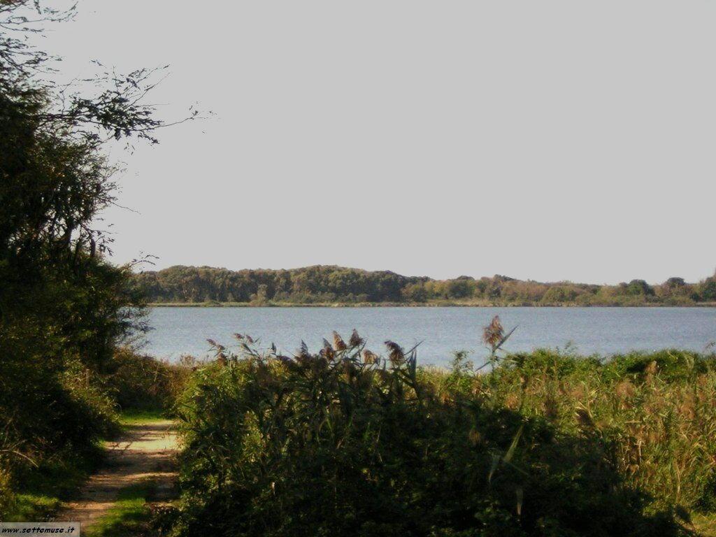 Sabaudia laghi salmastri