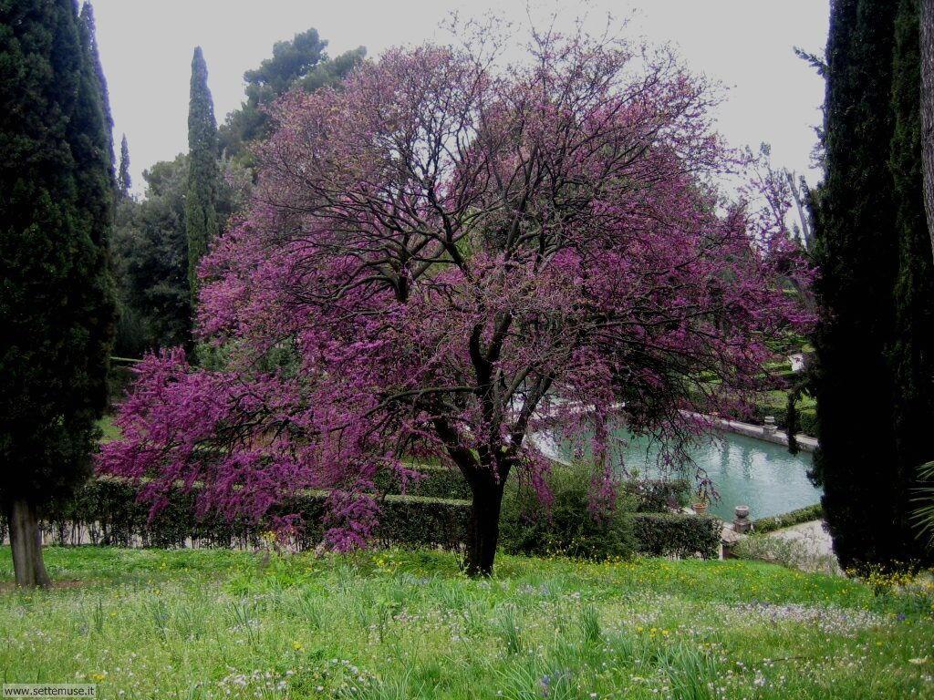 Foto di Tivoli villa d'este 040