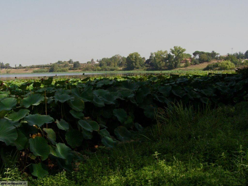 foto lago_monterosi 1