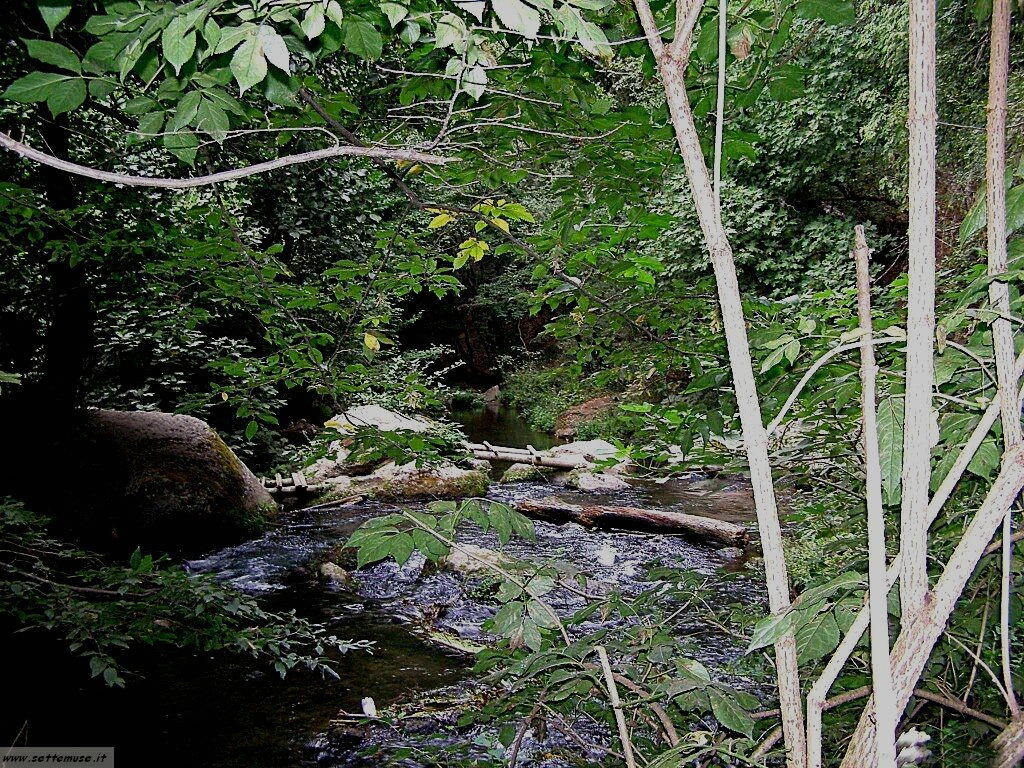 parco Valle del Treja foto 93