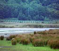 Caprarola Riserva Lago Vico