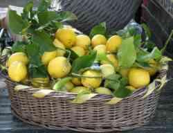 Sagra dei Limoni di Monterosso