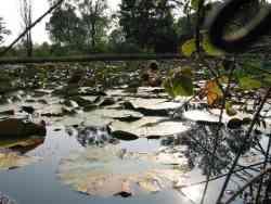 Parco delle Groane - piante acquatiche