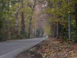 la 16^ strada di Cesate