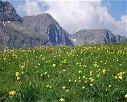 Madesimo - Giardino Alpino Valcava
