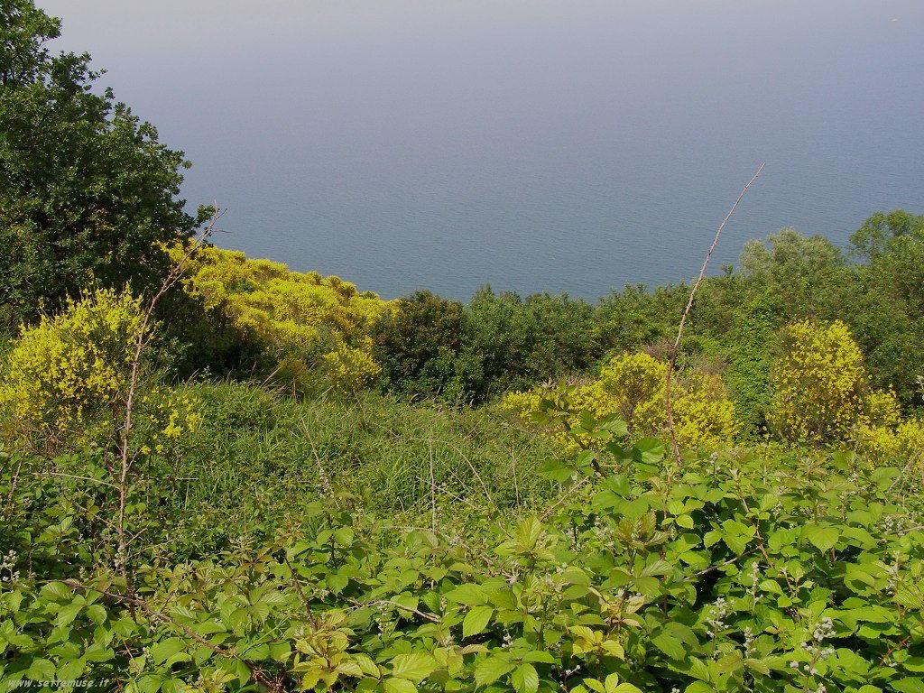 Il mare visto da Gabicce Monte