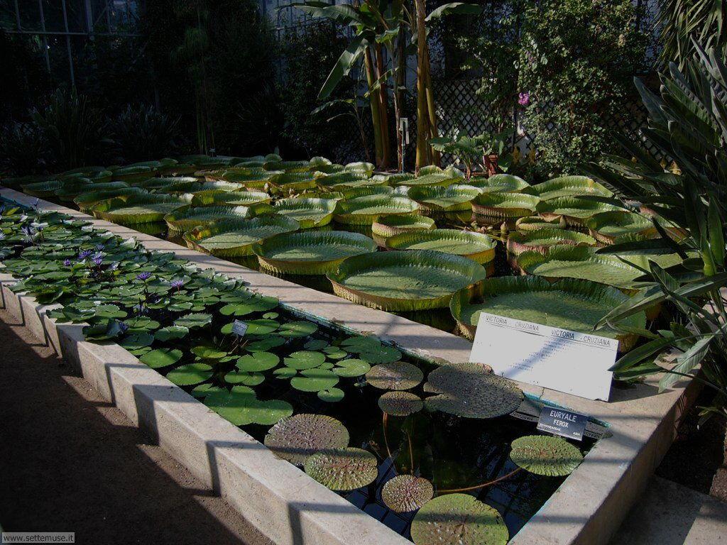 Fiori al parco botanico di Villa Taranto