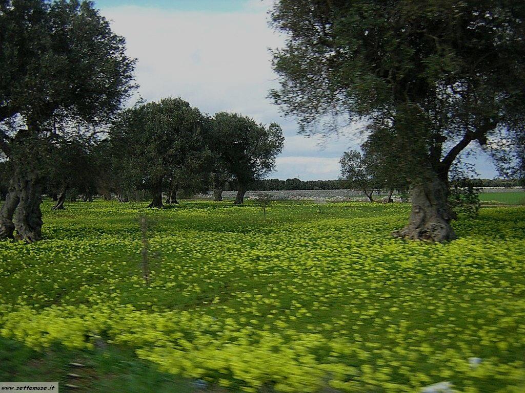 Lecce alessano 14