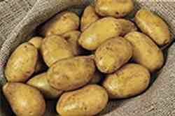 Patate di Zapponeta