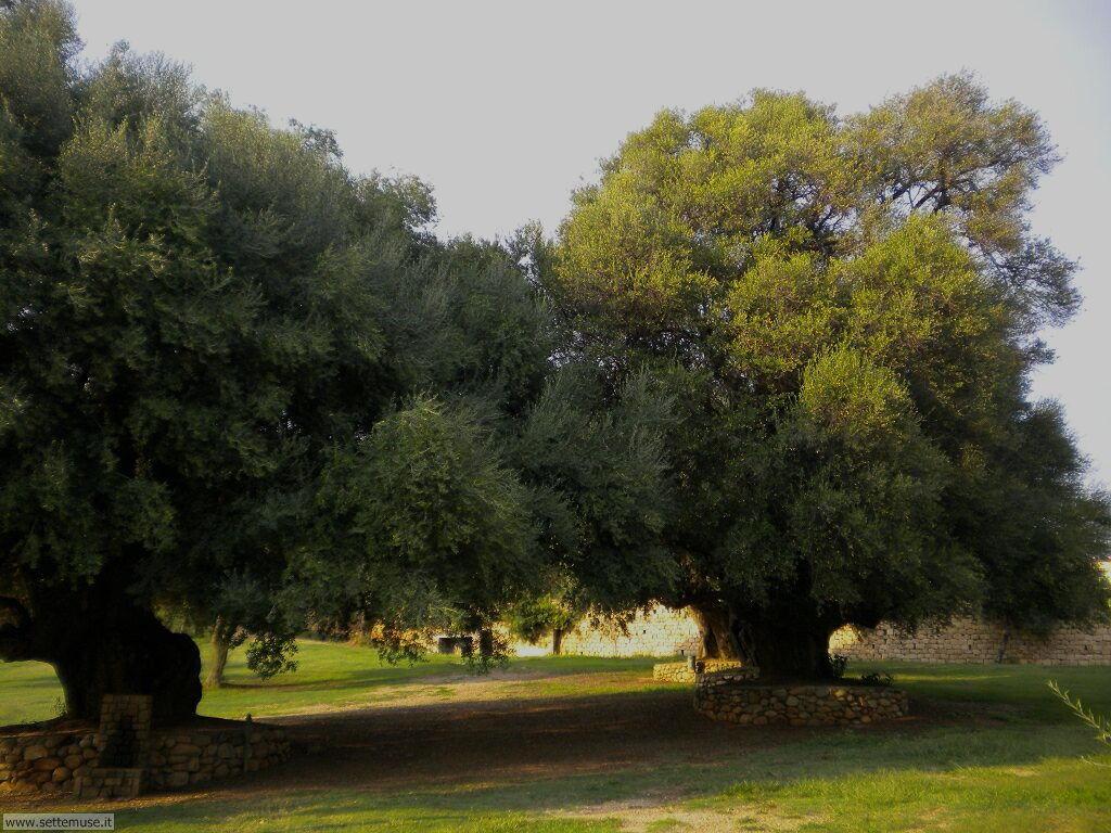 Santa Maria Navarrese 002