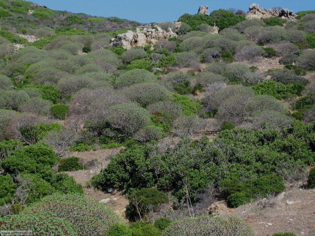 Isola Asinara 002