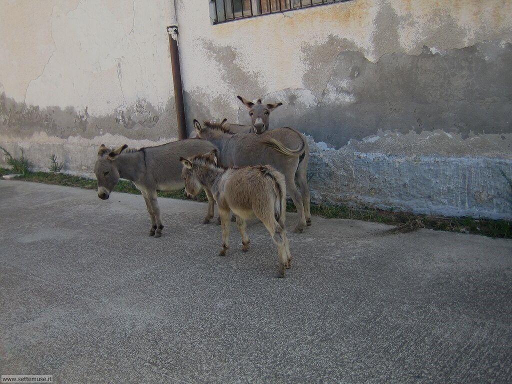 Isola Asinara 006