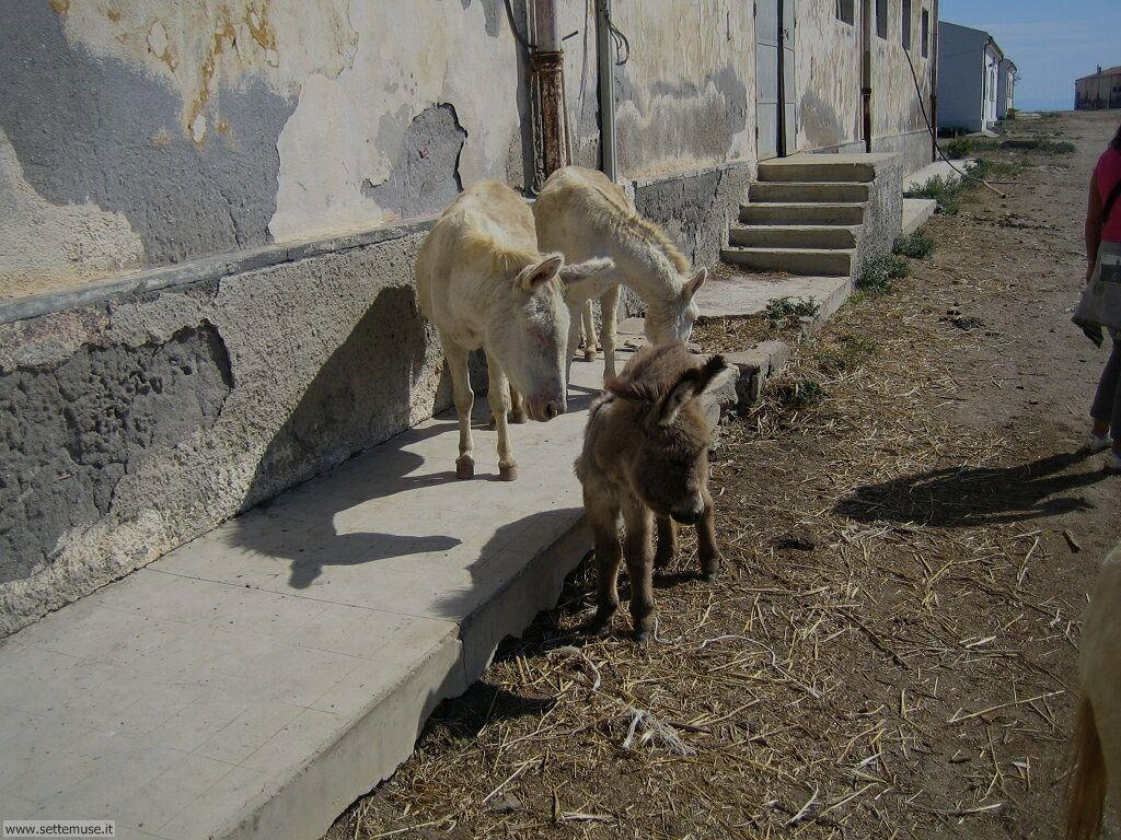 Isola Asinara 009