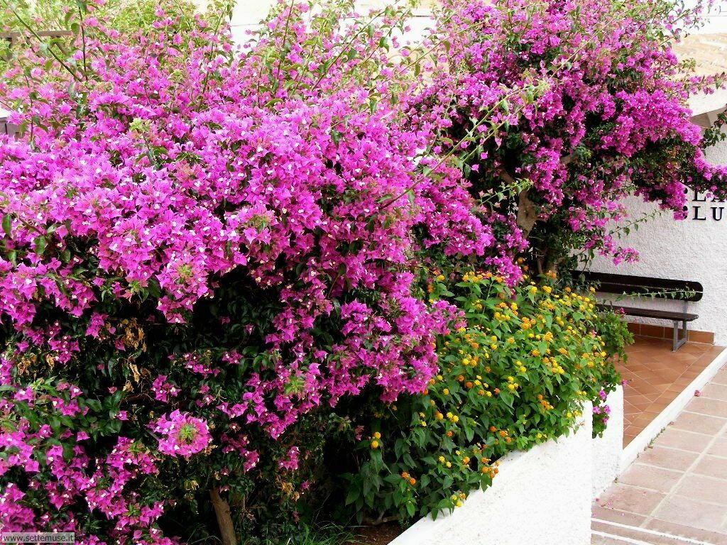 fiori della sardegna 018