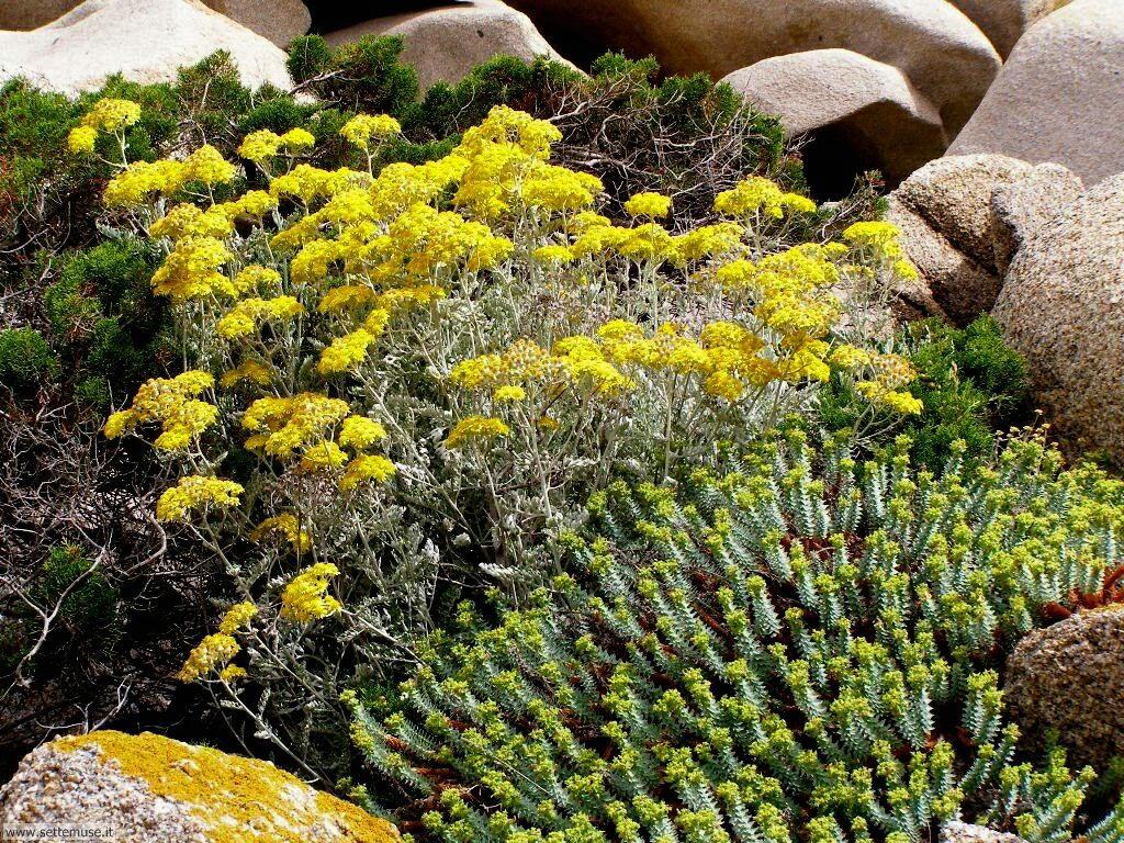 fiori della sardegna 019