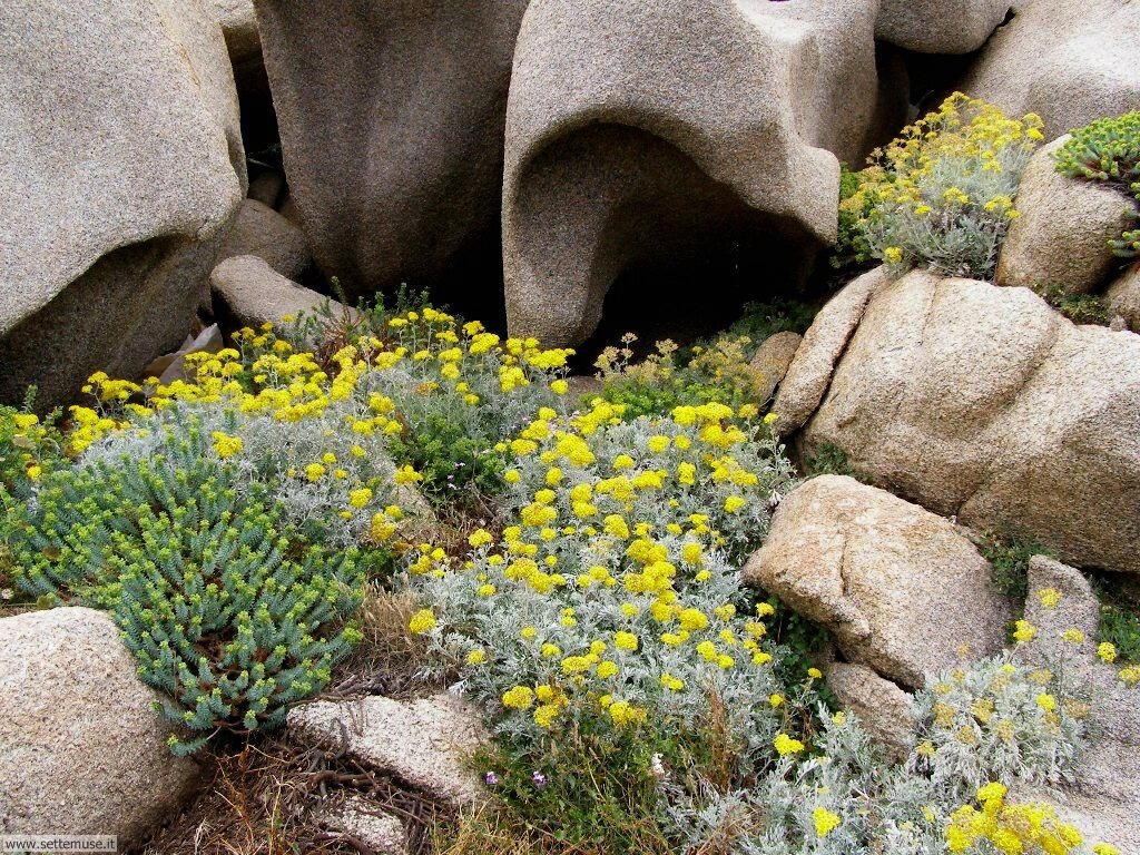 fiori della sardegna 022
