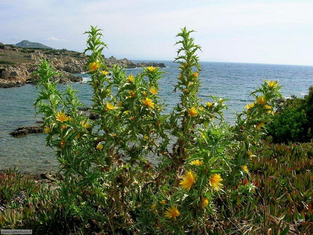 fiori della sardegna 030