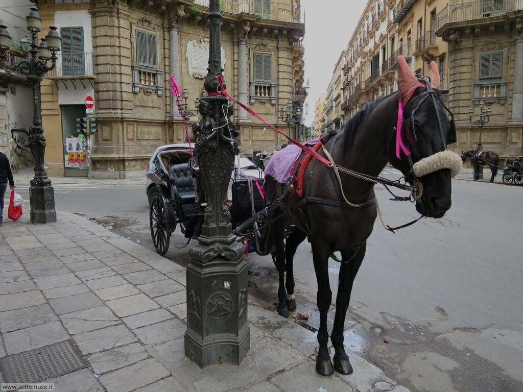 Palermo città pagina 4  007