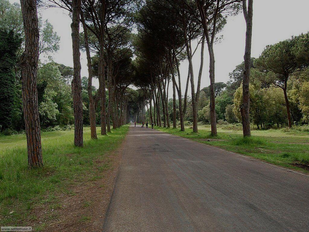 PI_san_rossore/PI_san_rossore_062.jpg