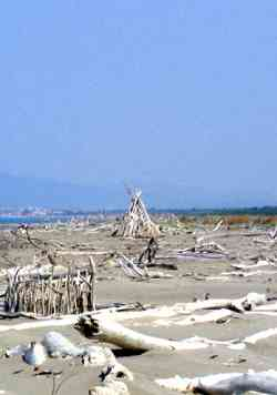 Principina spiaggia vicino all'Ombrone