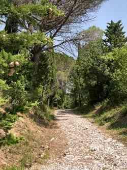 Bibbona - Foto su un sentiero della Macchia Magona