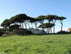 Parco Naturale di Rimigliano