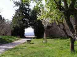 San Gimignano - Un angolo verde