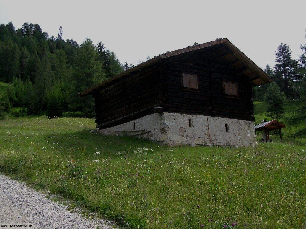 TN_bellamonte/bellamonte_208.jpg