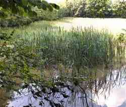 Biotopo Lago Costa