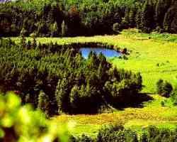 Altopiano di Pinè - Biotopo Lago Laghestel