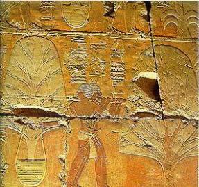 rappresentazione della terra di Punt